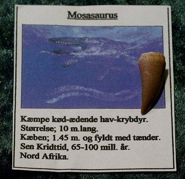 hav dinosaur